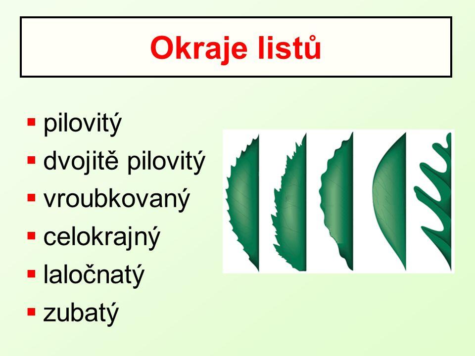 Okraje listů  pilovitý  dvojitě pilovitý  vroubkovaný  celokrajný  laločnatý  zubatý