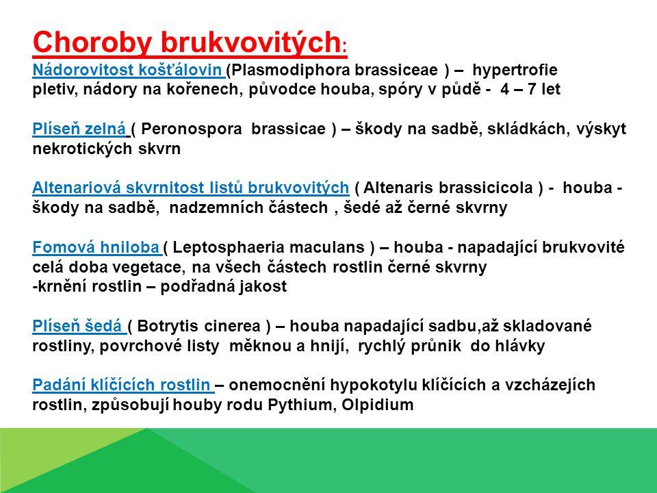 Choroby brukvovitých : Nádorovitost košťálovin (Plasmodiphora brassiceae ) – hypertrofie pletiv, nádory na kořenech, původce houba, spóry v půdě - 4 –