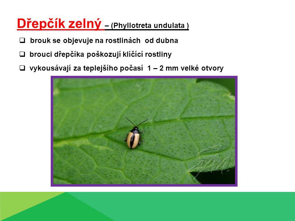 Košťálová zelenina - kontrolní otázky: 1.Který škůdce košťálovin způsobuje holožír.