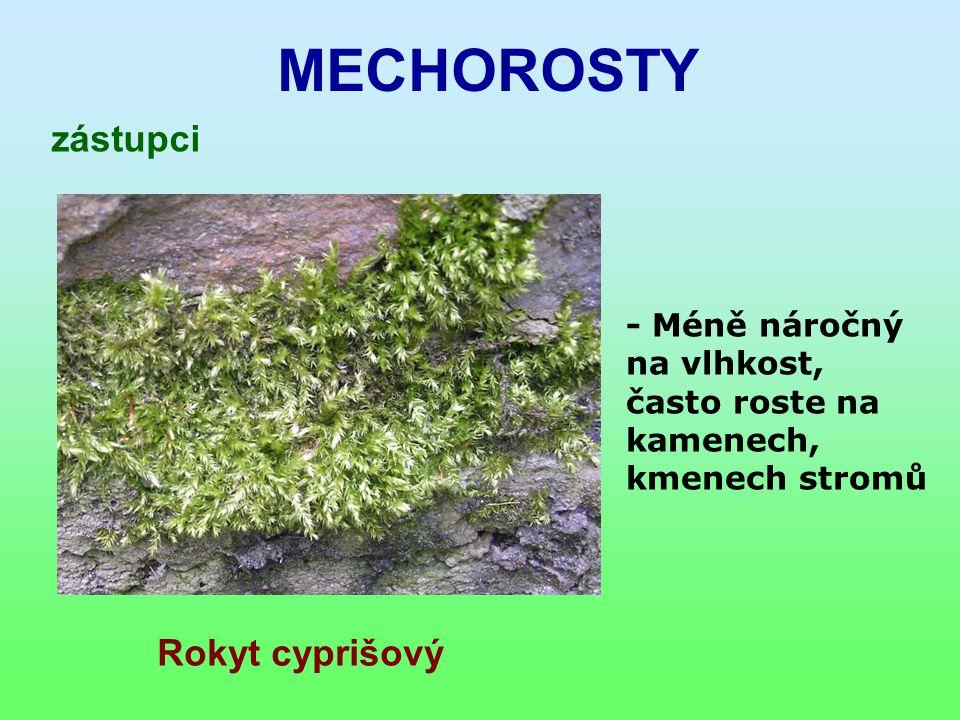 MECHOROSTY zástupci Rokyt cyprišový - Méně náročný na vlhkost, často roste na kamenech, kmenech stromů
