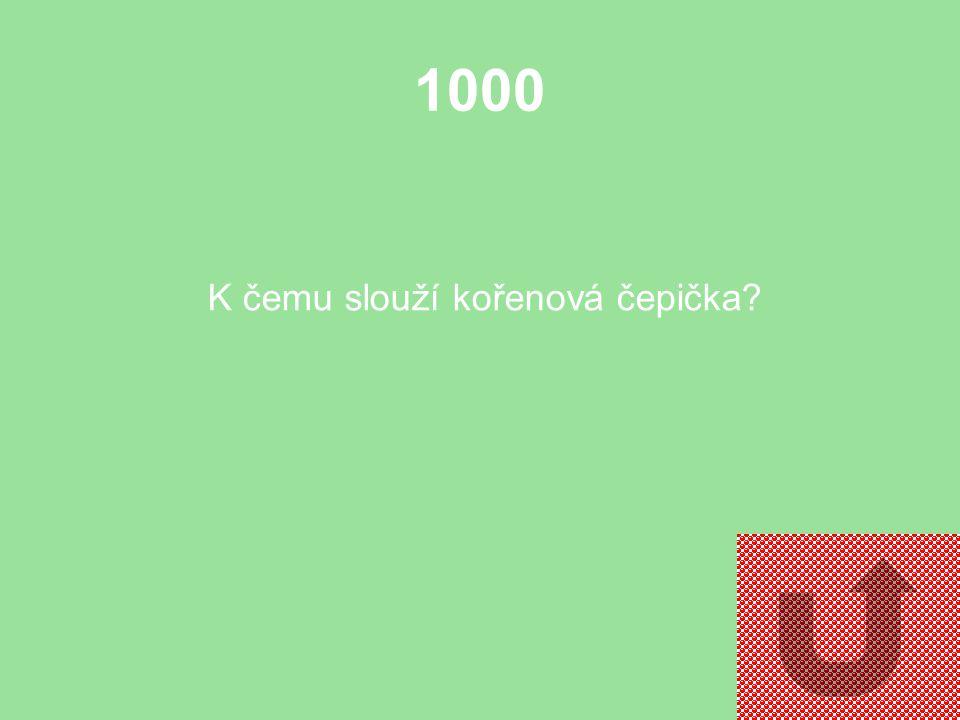 1000 K čemu slouží kořenová čepička?