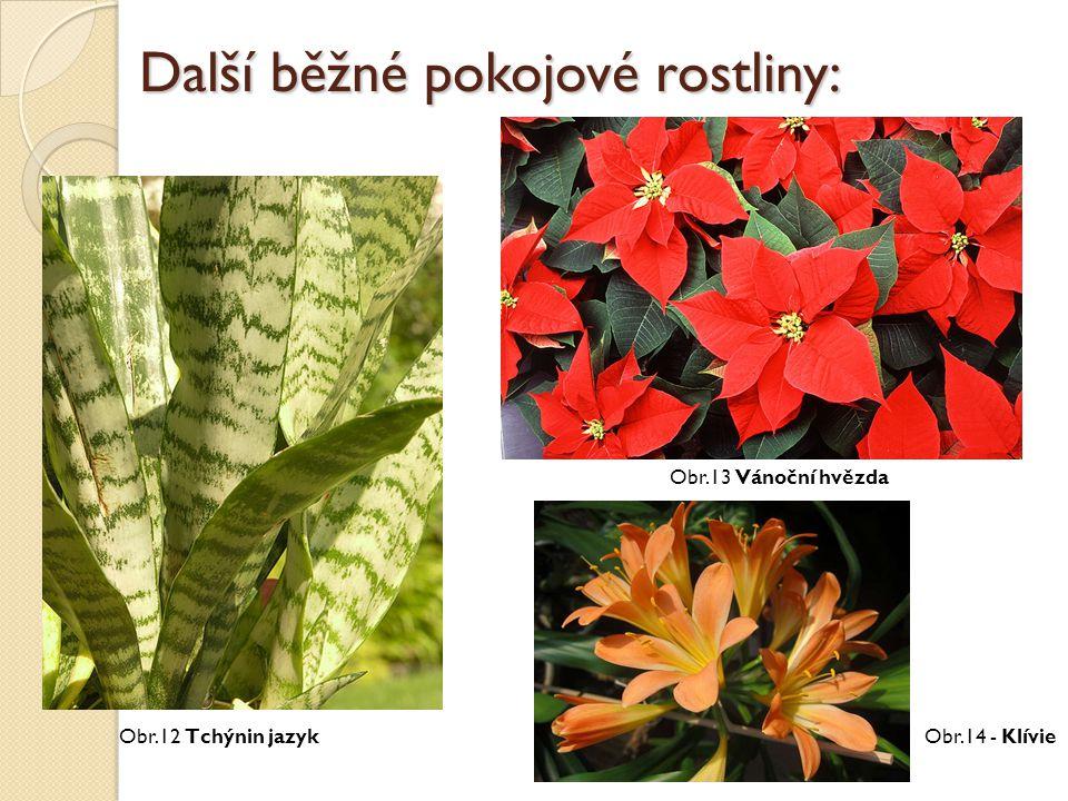 Další běžné pokojové rostliny: Obr.14 - Klívie Obr.13 Vánoční hvězda Obr.12 Tchýnin jazyk