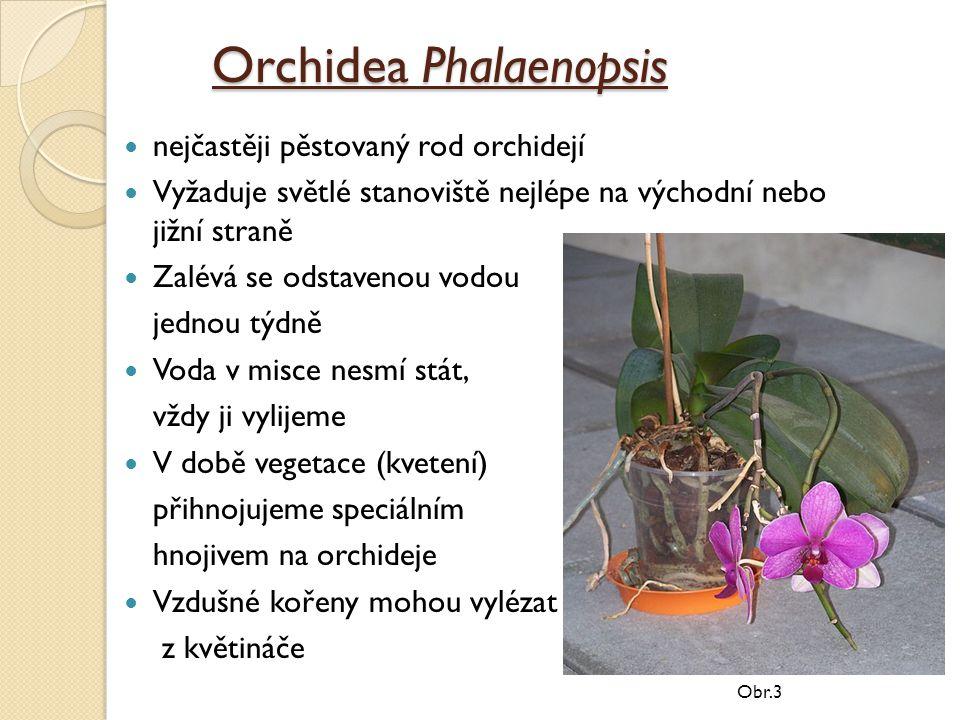 Orchidea Phalaenopsis nejčastěji pěstovaný rod orchidejí Vyžaduje světlé stanoviště nejlépe na východní nebo jižní straně Zalévá se odstavenou vodou jednou týdně Voda v misce nesmí stát, vždy ji vylijeme V době vegetace (kvetení) přihnojujeme speciálním hnojivem na orchideje Vzdušné kořeny mohou vylézat z květináče Obr.3