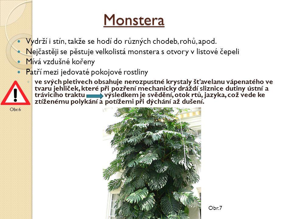 Monstera Vydrží i stín, takže se hodí do různých chodeb, rohů, apod.