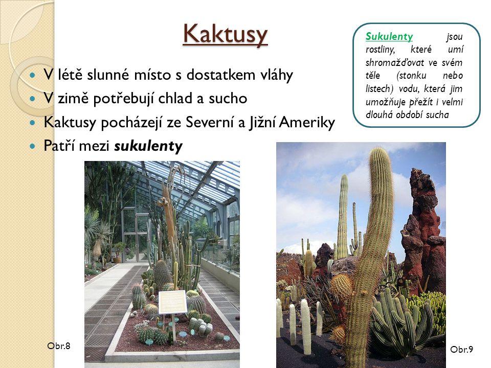 Kaktusy V létě slunné místo s dostatkem vláhy V zimě potřebují chlad a sucho Kaktusy pocházejí ze Severní a Jižní Ameriky Patří mezi sukulenty Obr.9 Obr.8 Sukulenty jsou rostliny, které umí shromažďovat ve svém těle (stonku nebo listech) vodu, která jim umožňuje přežít i velmi dlouhá období sucha