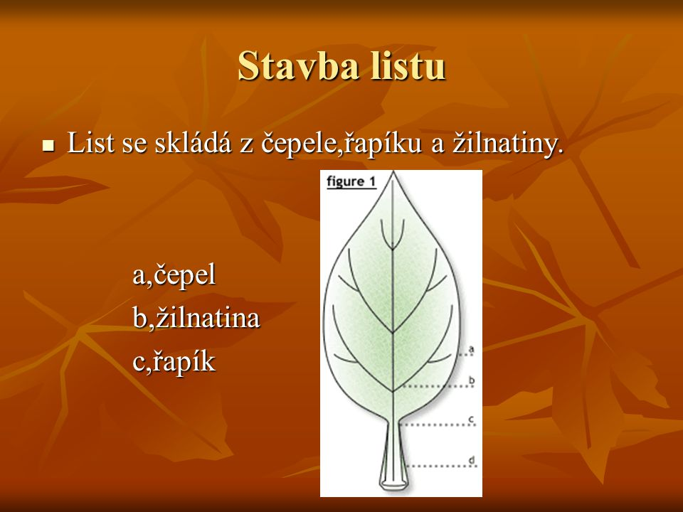 Stavba listu List se skládá z čepele,řapíku a žilnatiny. List se skládá z čepele,řapíku a žilnatiny. a,čepel a,čepel b,žilnatina b,žilnatina c,řapík c