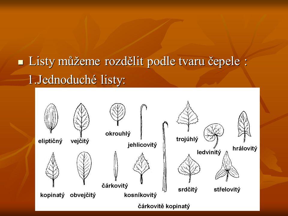 Listy můžeme rozdělit podle tvaru čepele : Listy můžeme rozdělit podle tvaru čepele : 1.Jednoduché listy: 1.Jednoduché listy: