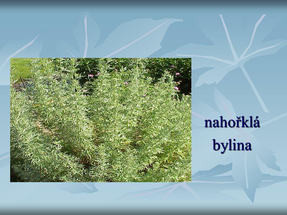 pelyněk nahořklá nahořklá bylina bylina