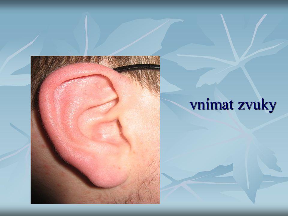 Slyšet vnímat zvuky vnímat zvuky