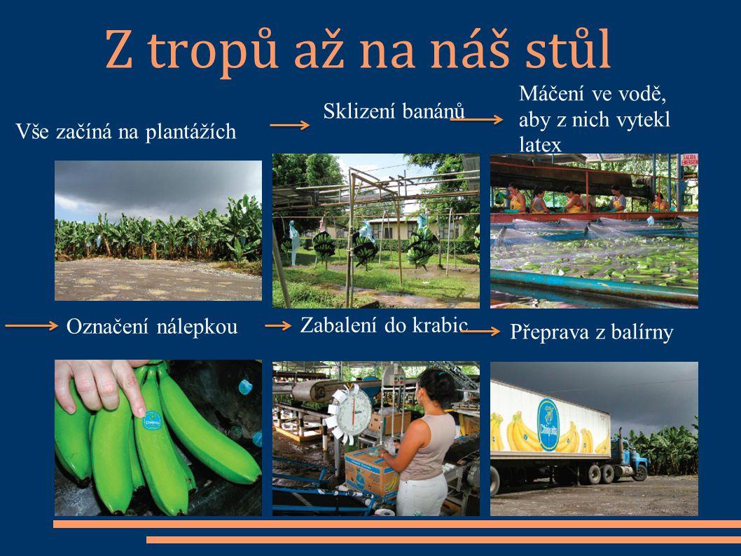 Z tropů až na náš stůl Vše začíná na plantážích Sklizení banánů Máčení ve vodě, aby z nich vytekl latex Označení nálepkou Zabalení do krabic Přeprava