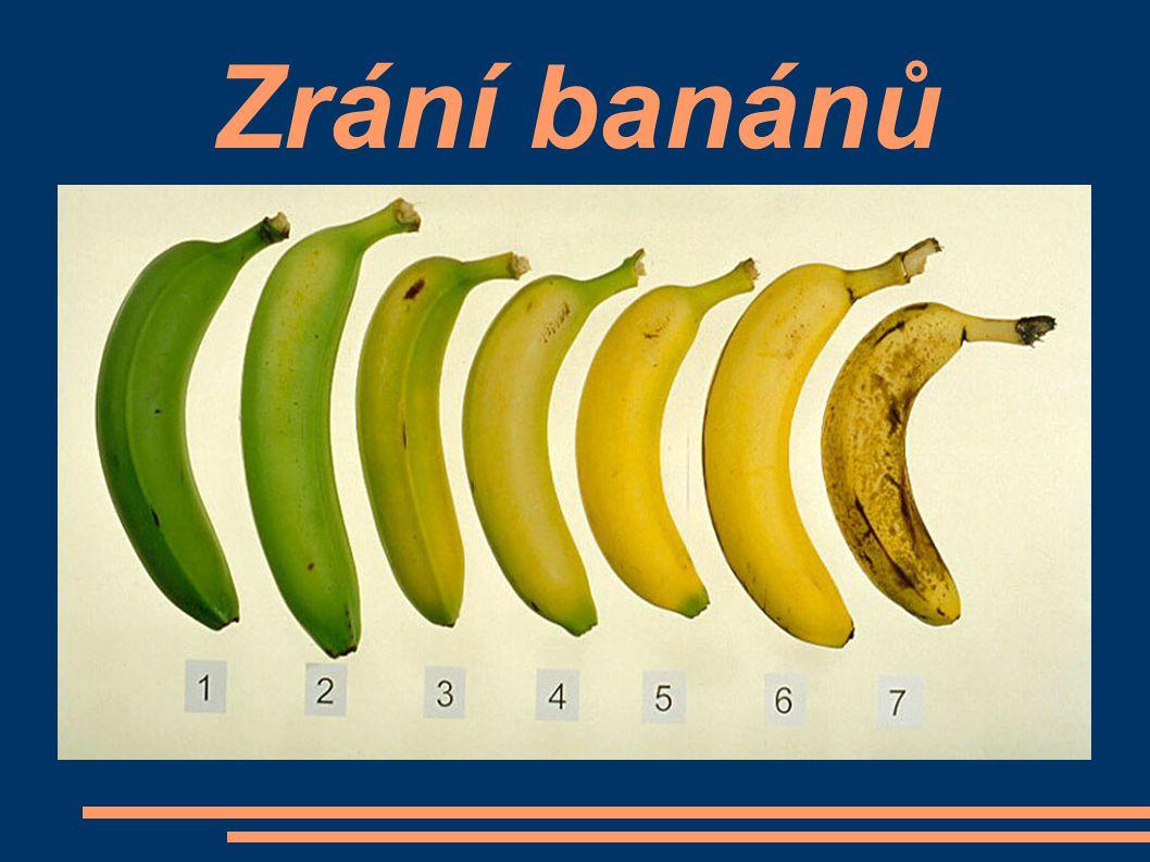 Problém - choroby a škůdci Na banánovníku trvale přežívá bakteriální hnědá hniloba, která způsobuje hnědé skvrny na plodech.