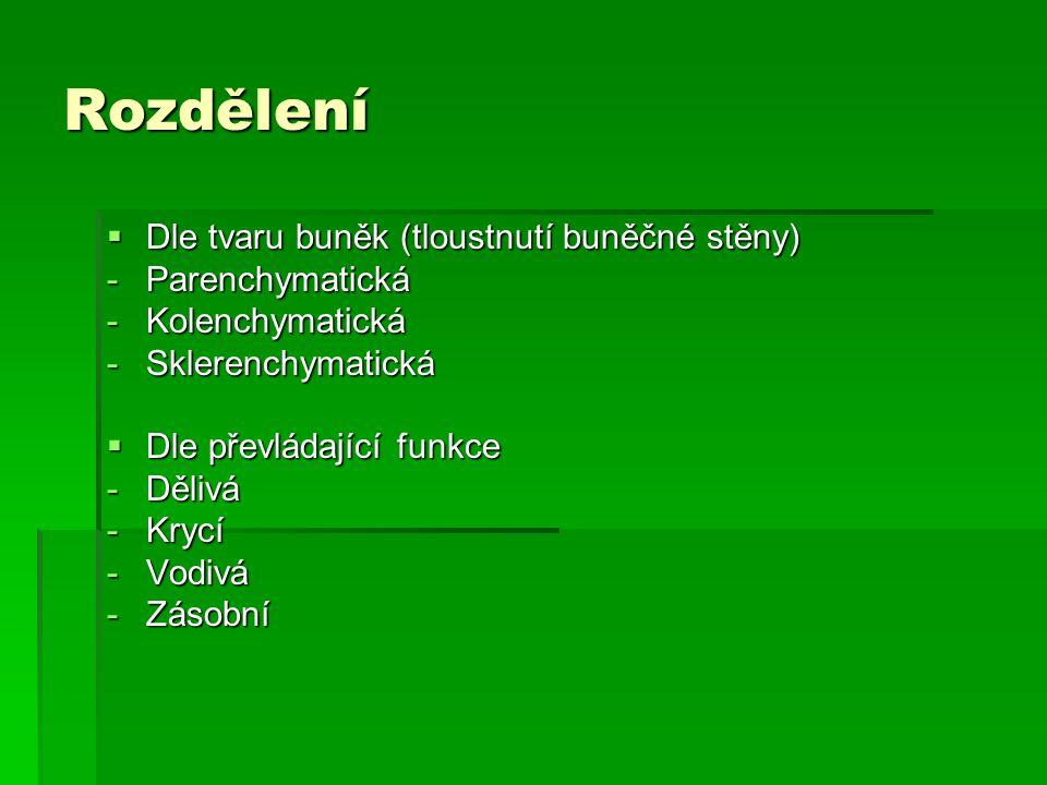  Dle tvaru buněk (tloustnutí buněčné stěny) -Parenchymatická -Kolenchymatická -Sklerenchymatická  Dle převládající funkce -Dělivá -Krycí -Vodivá -Zá