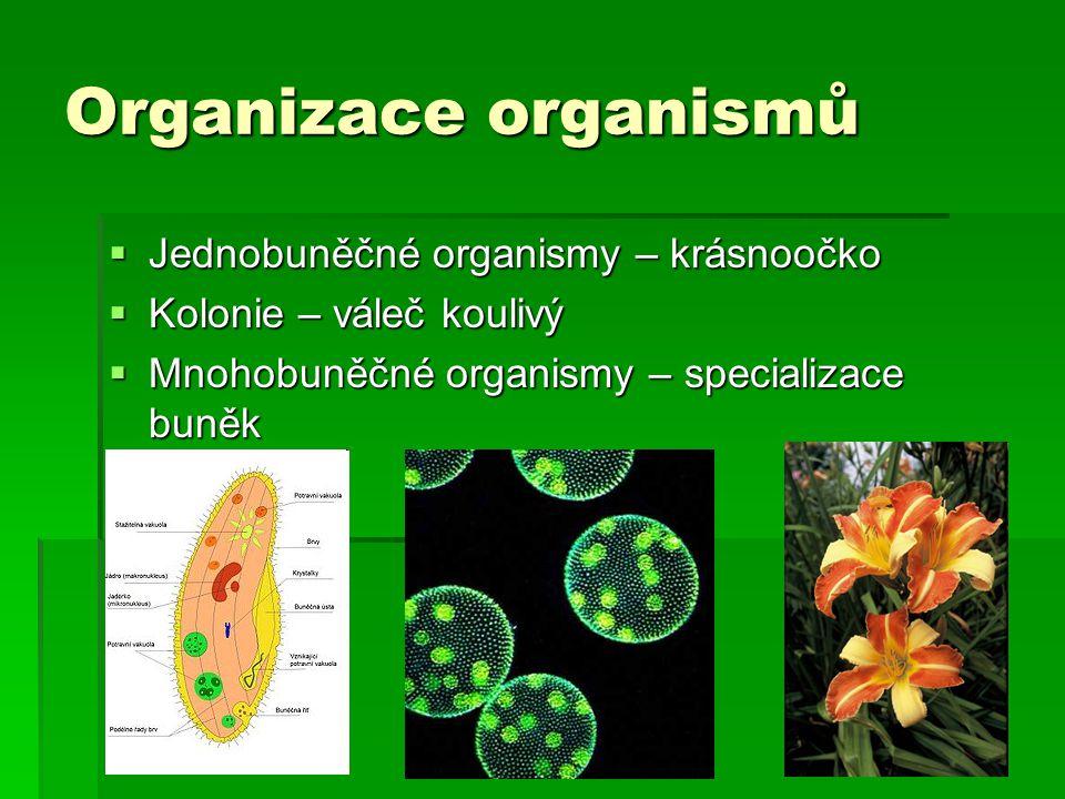 Organizace organismů  Jednobuněčné organismy – krásnoočko  Kolonie – váleč koulivý  Mnohobuněčné organismy – specializace buněk