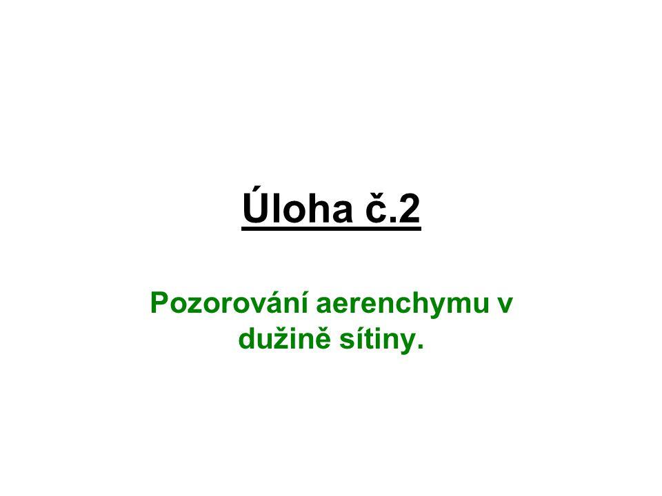 Úloha č.2 Pozorování aerenchymu v dužině sítiny.