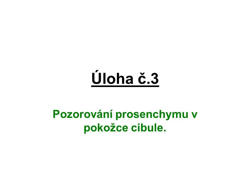Úloha č.3 Pozorování prosenchymu v pokožce cibule.
