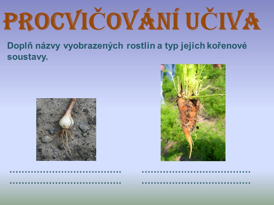 ProcVI Č OVÁNÍ U Č IVA Doplň názvy vyobrazených rostlin a typ jejich kořenové soustavy. ………………………………. ………………………………