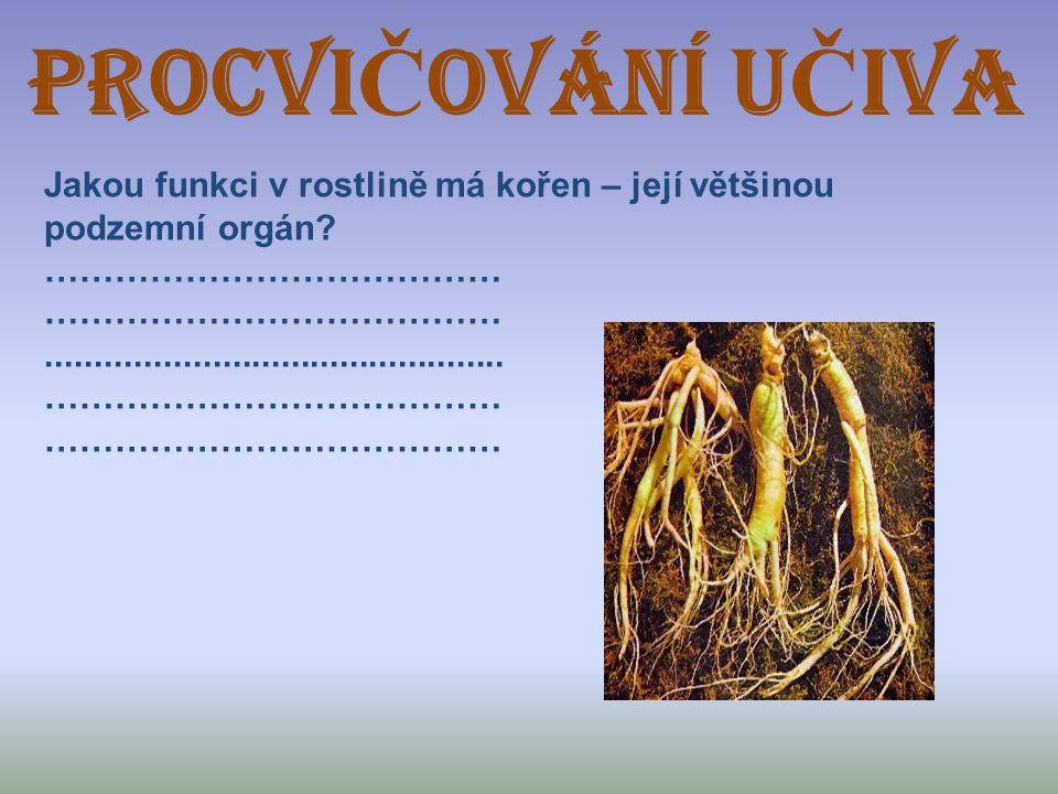 ProcVI Č OVÁNÍ U Č IVA Jakou funkci v rostlině má kořen – její většinou podzemní orgán? …………………………………............................................... …