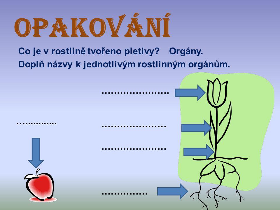 OPAKOVÁNÍ Co je v rostlině tvořeno pletivy?Orgány. Doplň názvy k jednotlivým rostlinným orgánům. …………………. ………………… …………… …............