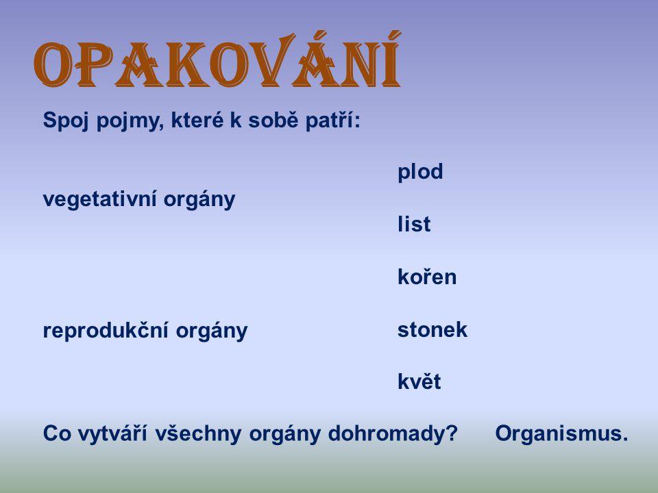 OPAKOVÁNÍ Spoj pojmy, které k sobě patří: vegetativní orgány reprodukční orgány plod list kořen stonek květ Co vytváří všechny orgány dohromady?Organi