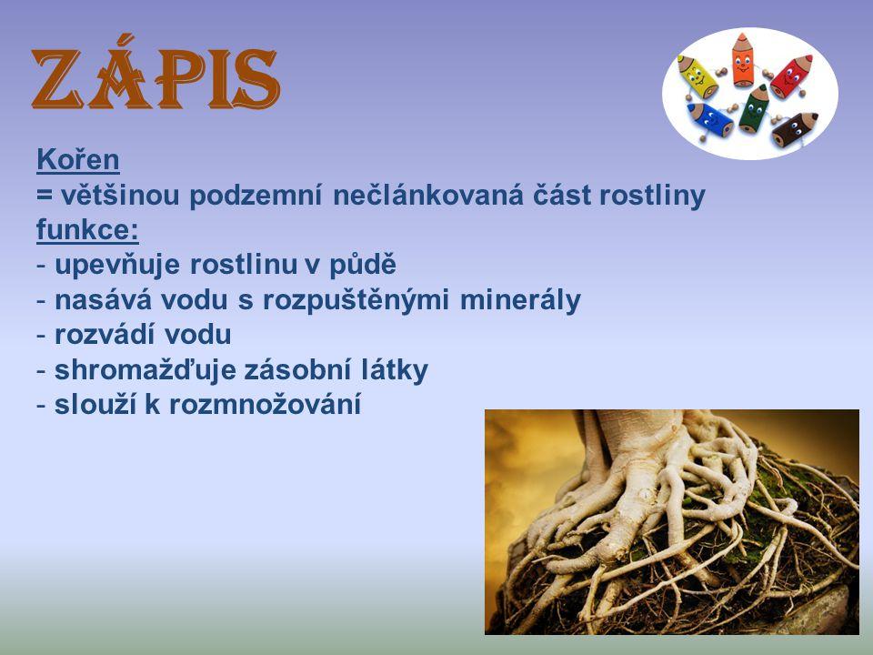 ZÁPIS Kořen = většinou podzemní nečlánkovaná část rostliny funkce: - upevňuje rostlinu v půdě - nasává vodu s rozpuštěnými minerály - rozvádí vodu - s
