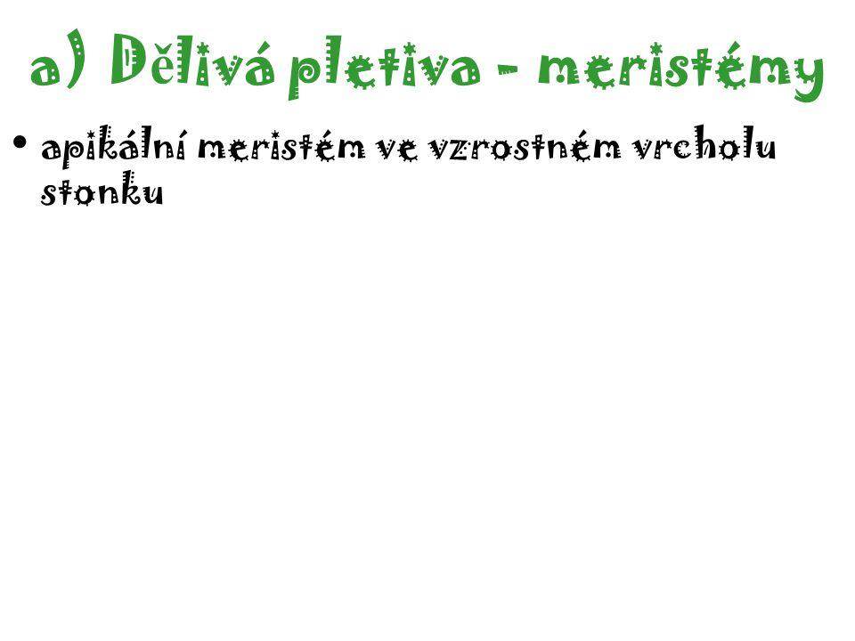 1.Meristem 2.Columelle (statocytes with statolithes) 3.Lateral part of the tip 4.Dead cells 5.Elongation zone a)D ě livá pletiva - meristémy apikální meristém ko ř enové špi č ce