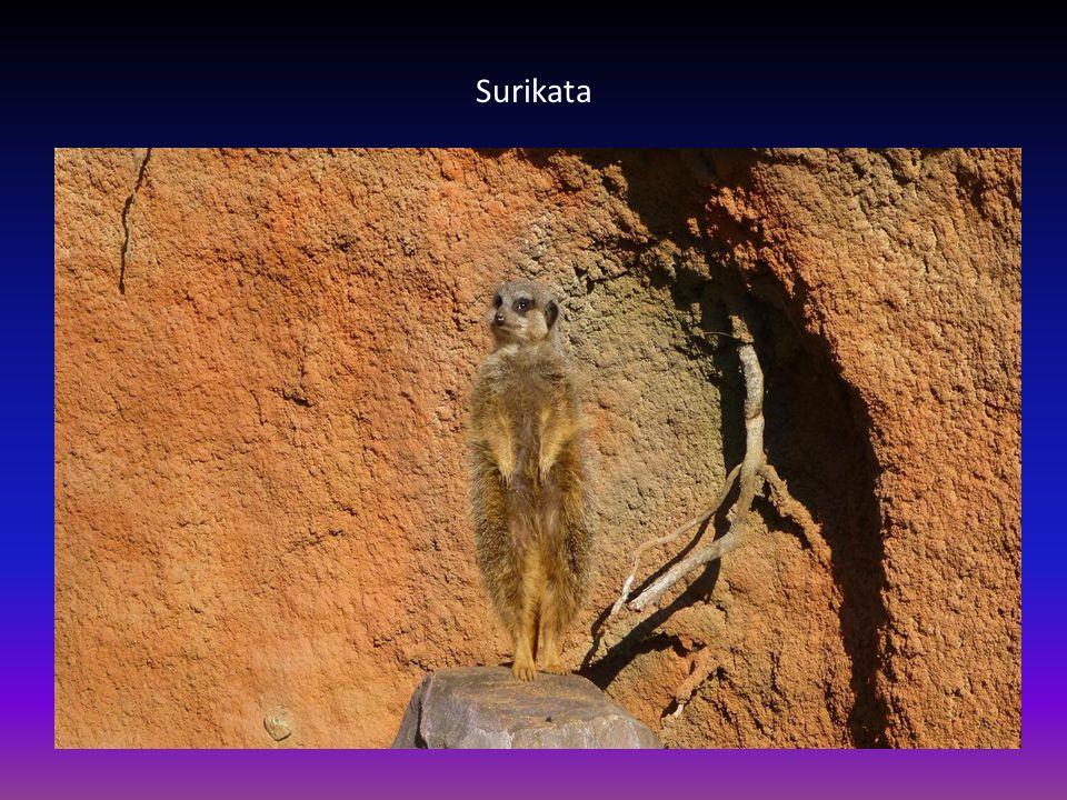 Další pohled na skupinu lemurů