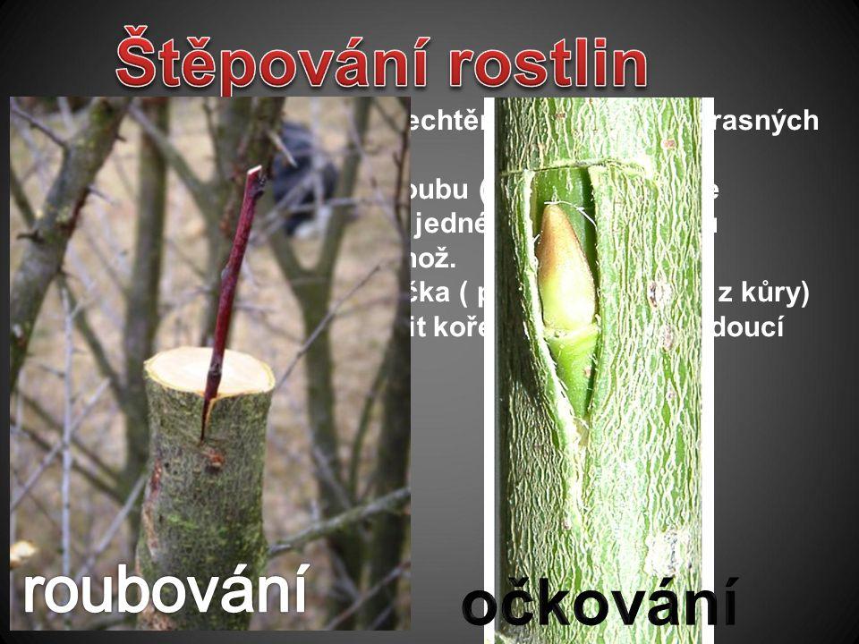 Nejčastěji se používá při šlechtění ovocných a okrasných stromů. a)Roubování - přenesení roubu ( u dřevin obvykle část letorostu -větvička) - z jedné