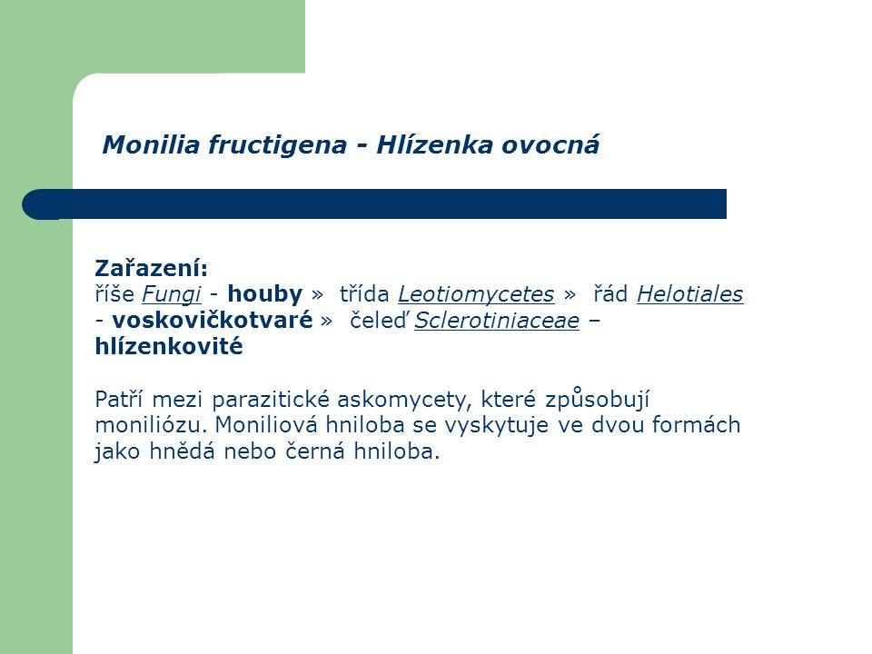 Zařazení: říše Fungi - houby » třída Leotiomycetes » řád Helotiales - voskovičkotvaré » čeleď Sclerotiniaceae – hlízenkovitéFungiLeotiomycetesHelotial