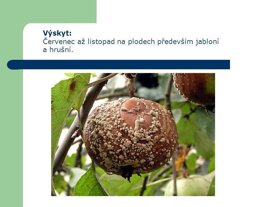 Houba přezimuje v podobě vícebuněčného podhoubí na napadených mumifikovaných plodech, na kterých se počátkem léta vytvářejí polštářky nových konidií, které jsou zdrojem pro další infekce.