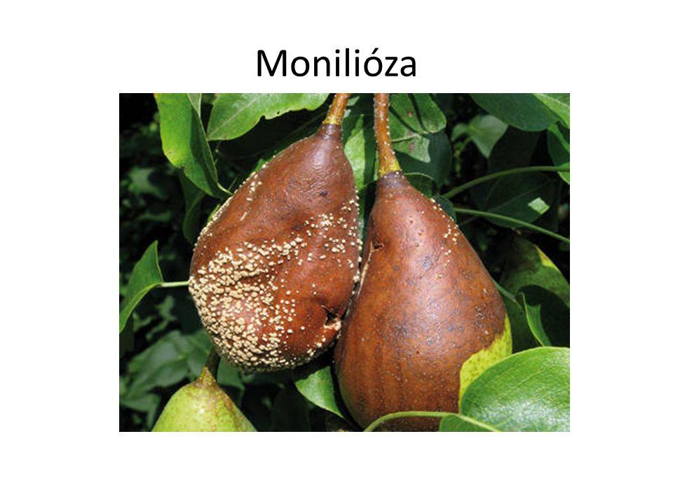 Monilióza