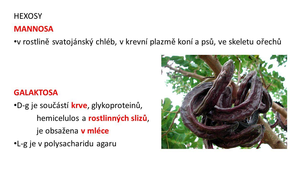HEXOSY MANNOSA v rostlině svatojánský chléb, v krevní plazmě koní a psů, ve skeletu ořechů GALAKTOSA D-g je součástí krve, glykoproteinů, hemicelulos