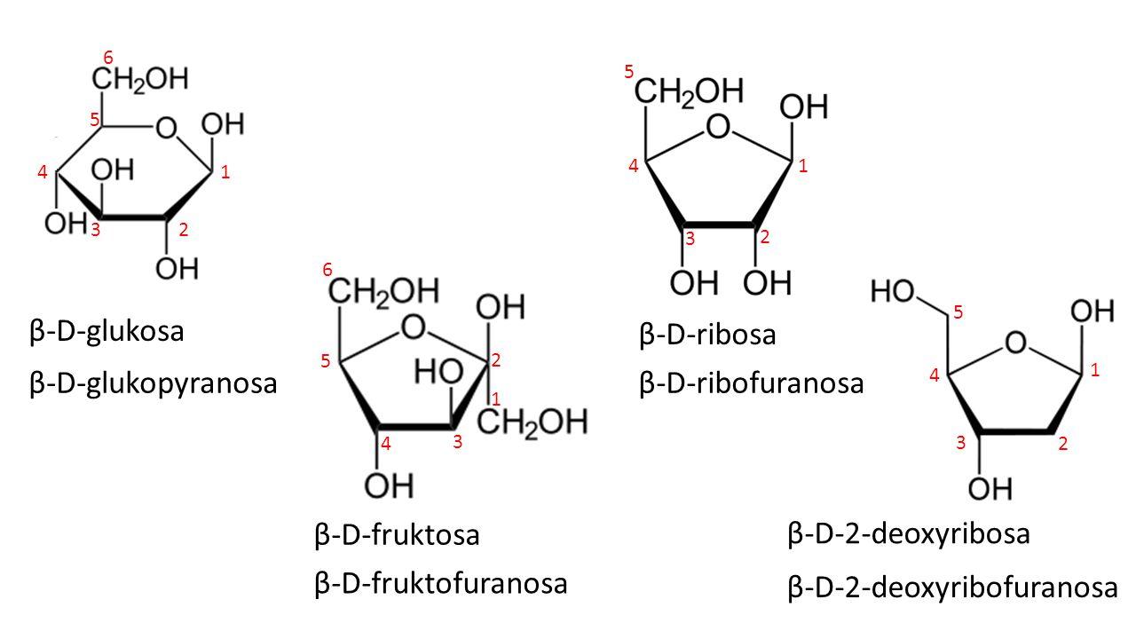 β-D-fruktosa β-D-glukosa β-D-ribosa β-D-2-deoxyribosa β-D-glukopyranosa β-D-fruktofuranosa β-D-ribofuranosa β-D-2-deoxyribofuranosa 1 2 3 4 5 6 1 2 3