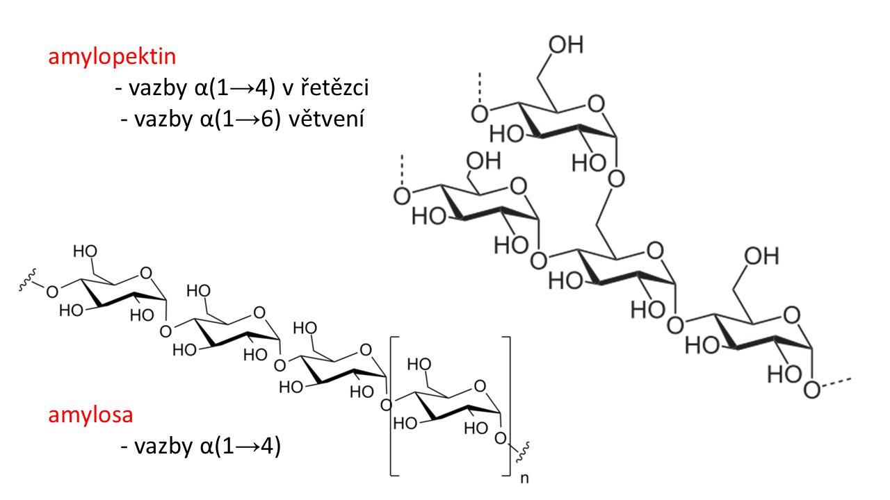 amylosa - vazby α(1 → 4) amylopektin - vazby α(1 → 4) v řetězci - vazby α(1 → 6) větvení