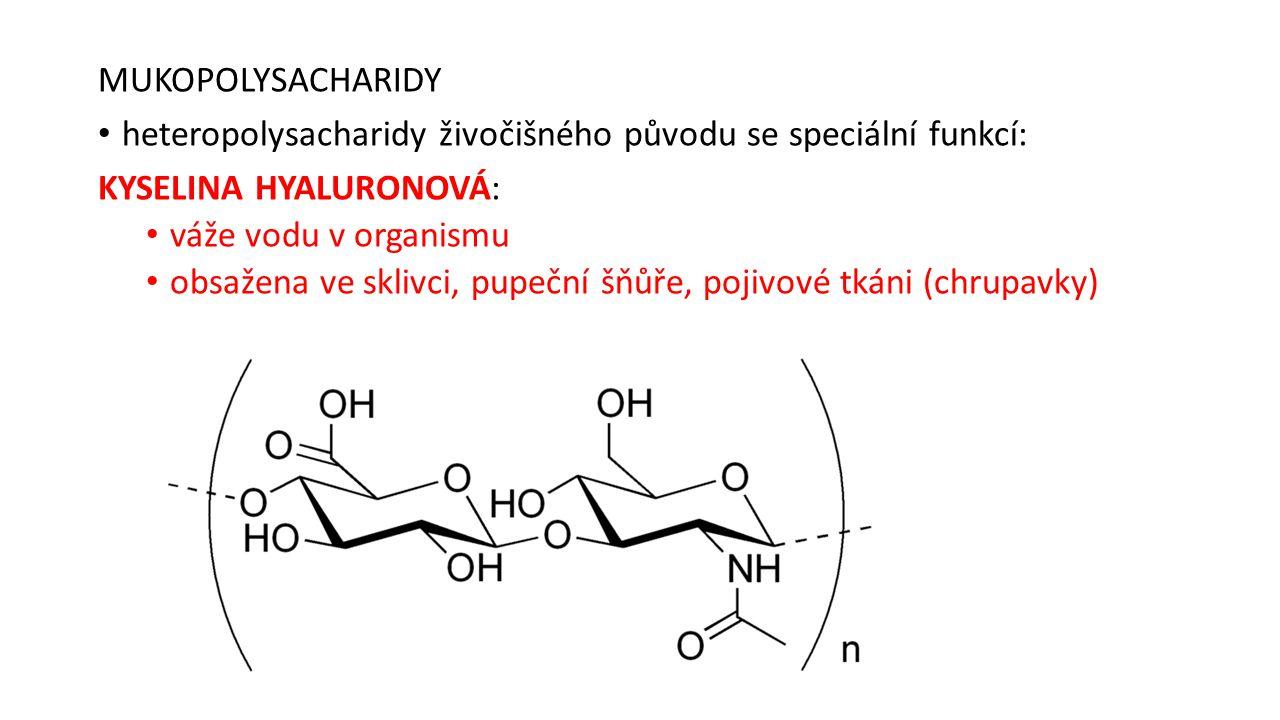 MUKOPOLYSACHARIDY heteropolysacharidy živočišného původu se speciální funkcí: KYSELINA HYALURONOVÁ: váže vodu v organismu obsažena ve sklivci, pupeční