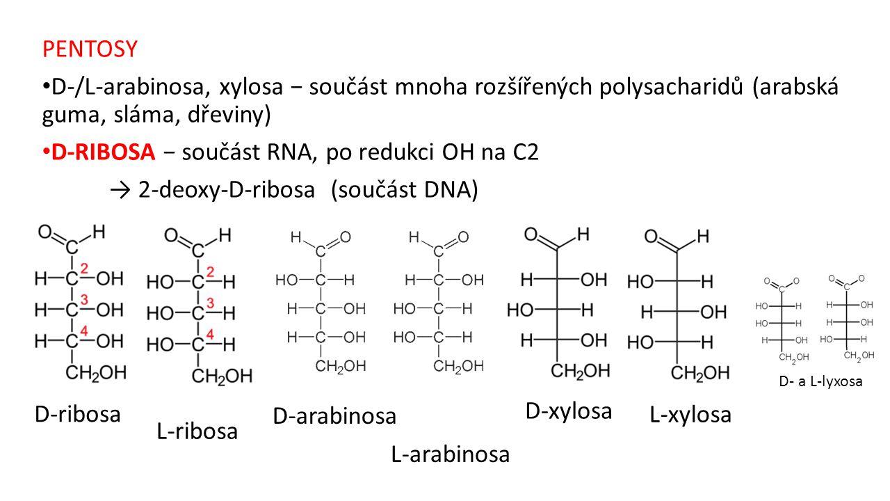 PENTOSY D-/L-arabinosa, xylosa − součást mnoha rozšířených polysacharidů (arabská guma, sláma, dřeviny) D-RIBOSA − součást RNA, po redukci OH na C2 →