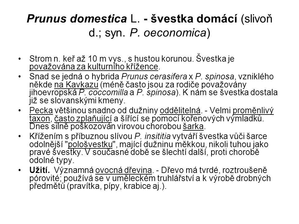 Prunus domestica L.- švestka domácí (slivoň d.; syn.