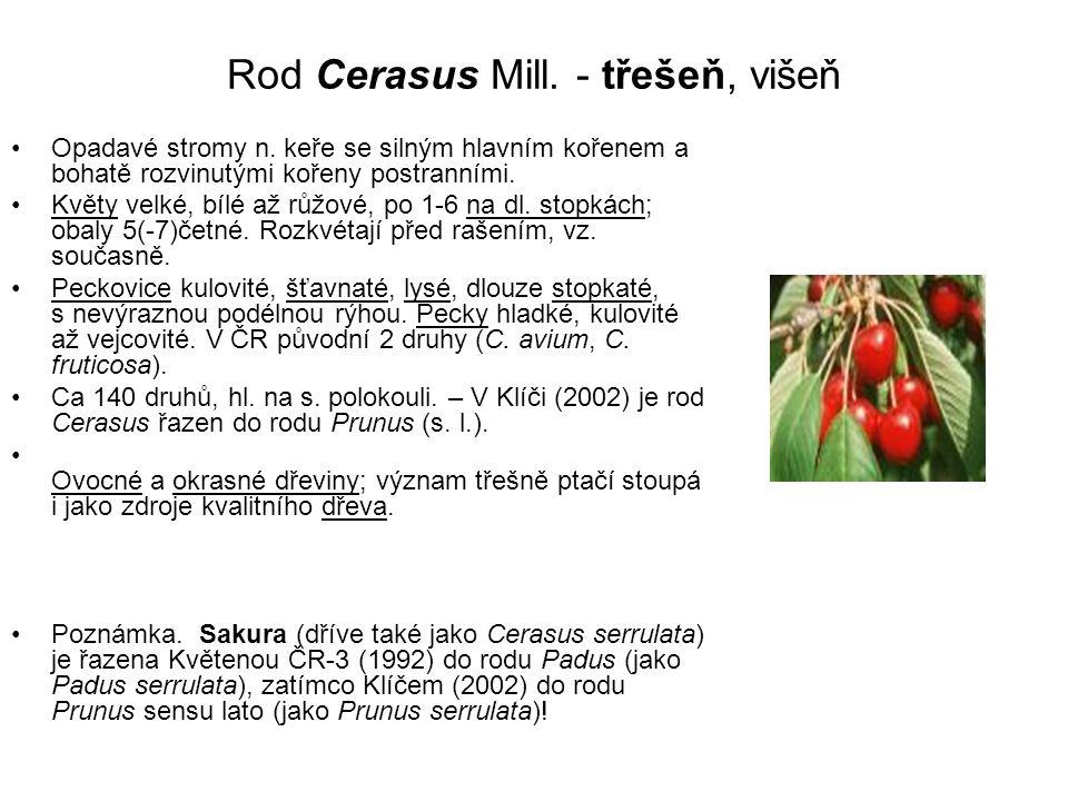 Rod Cerasus Mill.- třešeň, višeň Opadavé stromy n.