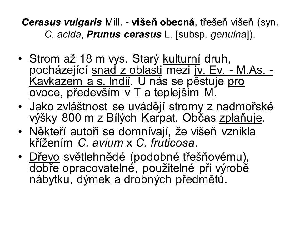 Cerasus vulgaris Mill.- višeň obecná, třešeň višeň (syn.