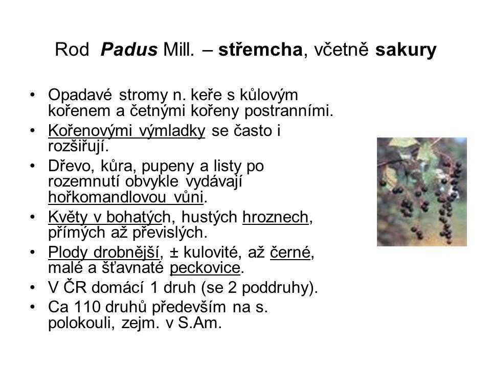 Rod Padus Mill.– střemcha, včetně sakury Opadavé stromy n.