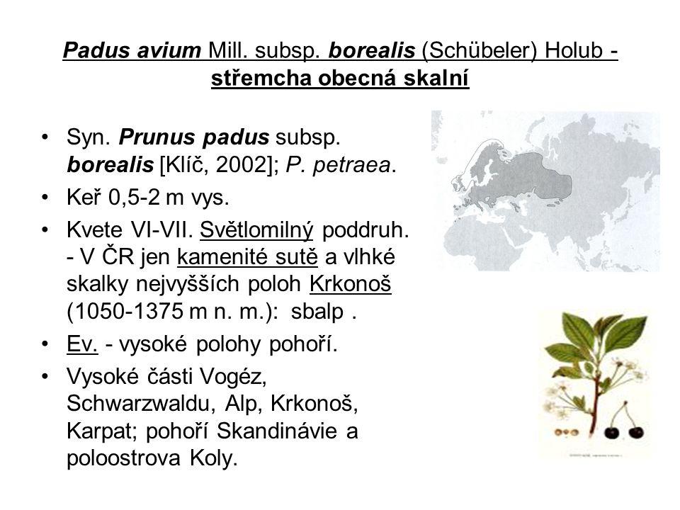 Padus avium Mill.subsp. borealis (Schübeler) Holub - střemcha obecná skalní Syn.