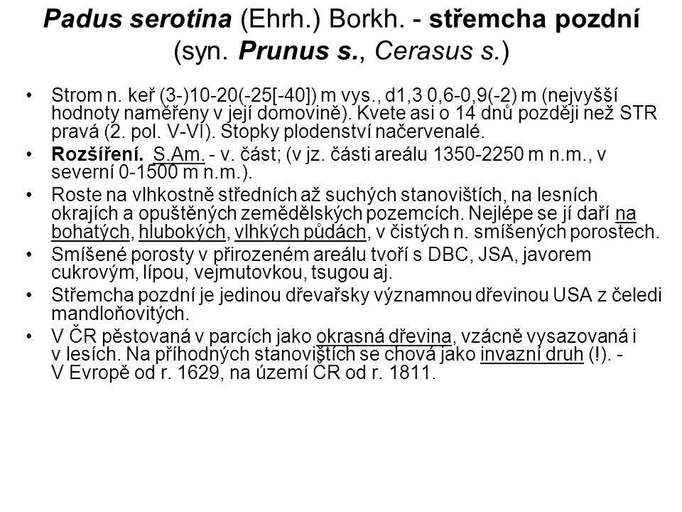 Padus serotina (Ehrh.) Borkh.- střemcha pozdní (syn.