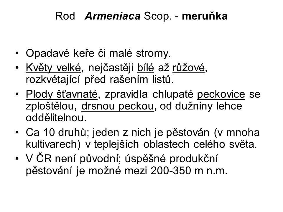 Rod Armeniaca Scop.- meruňka Opadavé keře či malé stromy.