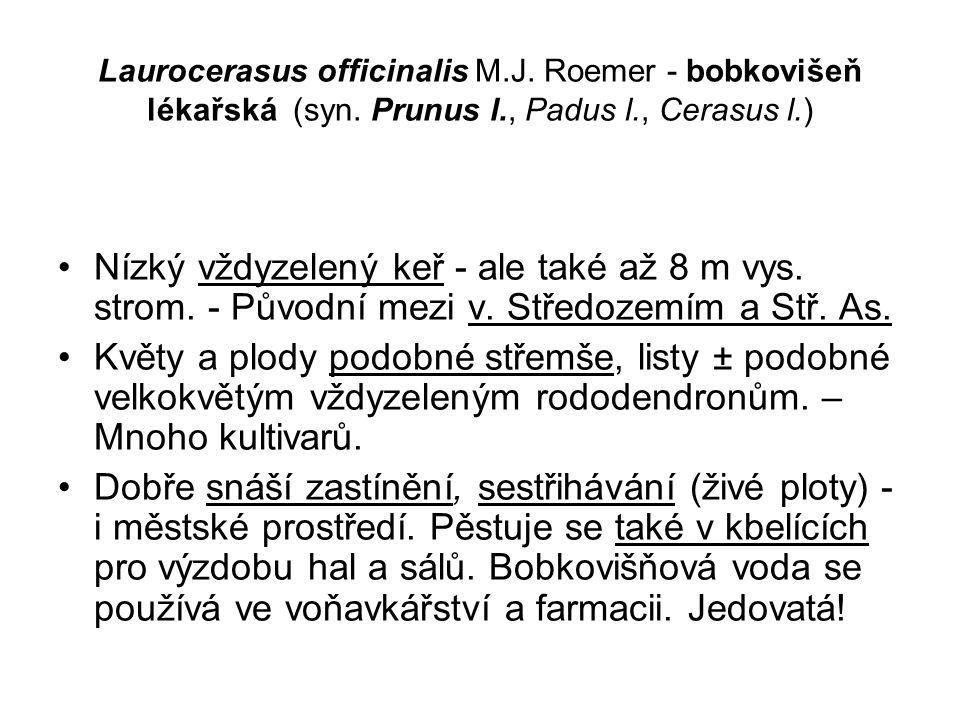 Laurocerasus officinalis M.J.Roemer - bobkovišeň lékařská (syn.
