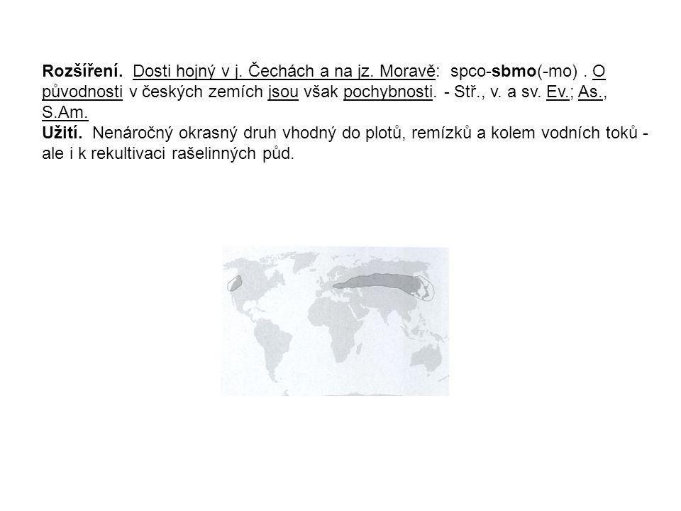 Amygdalus nana L.- mandloň nízká (syn. Prunus tenella) Prutovitý keř 1(-1,5) m vys., vystoupavý.