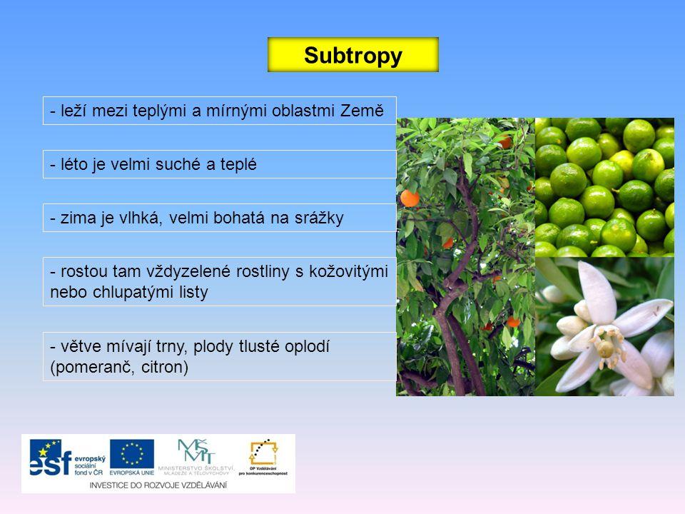 Subtropy - větve mívají trny, plody tlusté oplodí (pomeranč, citron) - leží mezi teplými a mírnými oblastmi Země - léto je velmi suché a teplé - zima