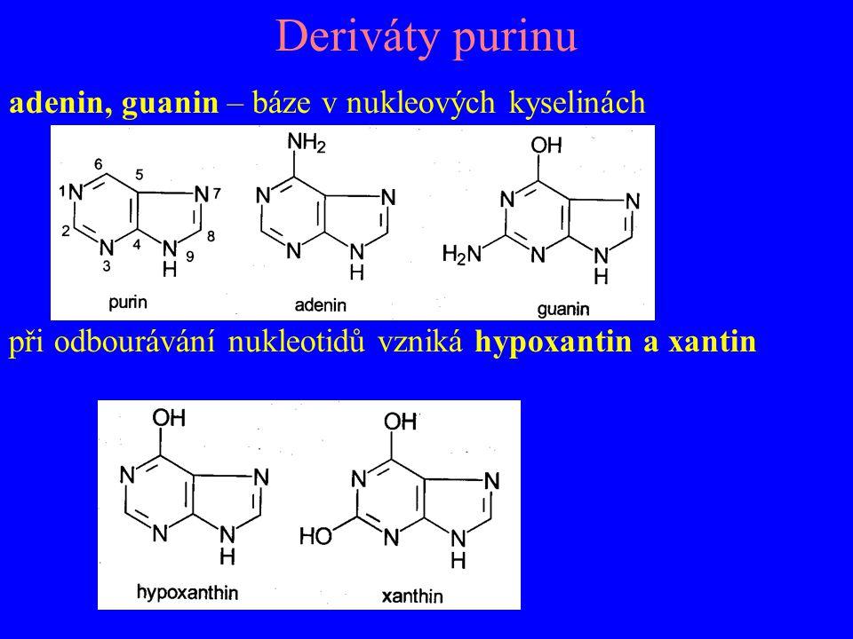 Deriváty purinu adenin, guanin – báze v nukleových kyselinách při odbourávání nukleotidů vzniká hypoxantin a xantin