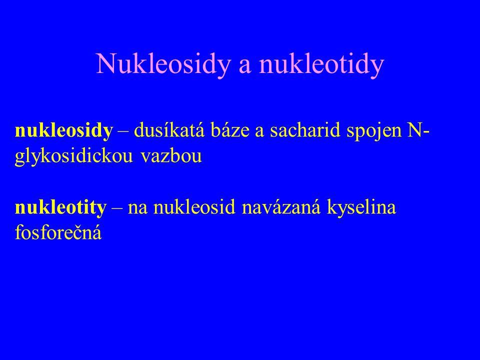 Nukleosidy a nukleotidy nukleosidy – dusíkatá báze a sacharid spojen N- glykosidickou vazbou nukleotity – na nukleosid navázaná kyselina fosforečná