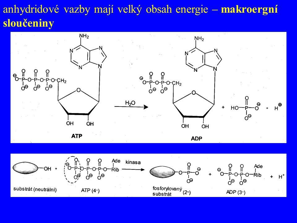 anhydridové vazby mají velký obsah energie – makroergní sloučeniny