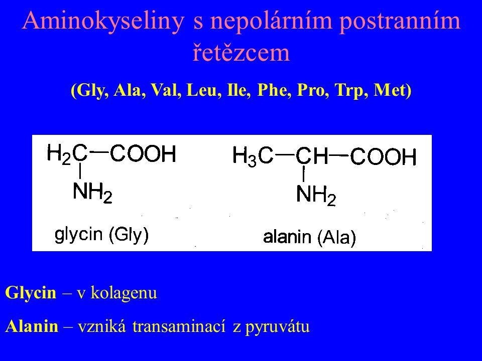 Aminokyseliny s nepolárním postranním řetězcem (Gly, Ala, Val, Leu, Ile, Phe, Pro, Trp, Met) Glycin – v kolagenu Alanin – vzniká transaminací z pyruvá