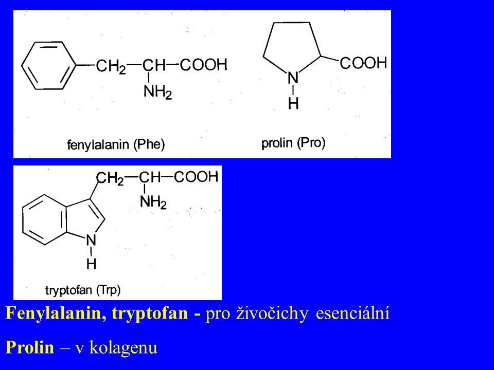 Fenylalanin, tryptofan - pro živočichy esenciální Prolin – v kolagenu